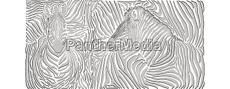 schwarz und weiss zebra hintergrund haut