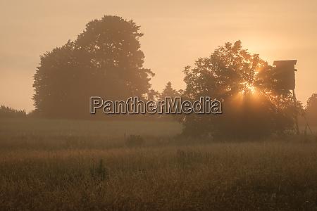 morgensonne landschaft landschaft mit baeumen und