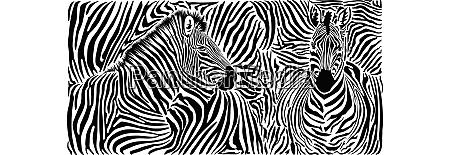zebrahautmuster mit zwei koepfen