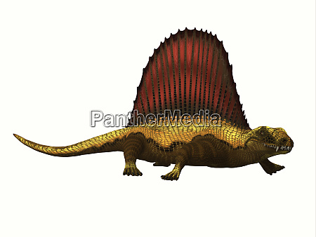 dimetrodon reptilienprofil