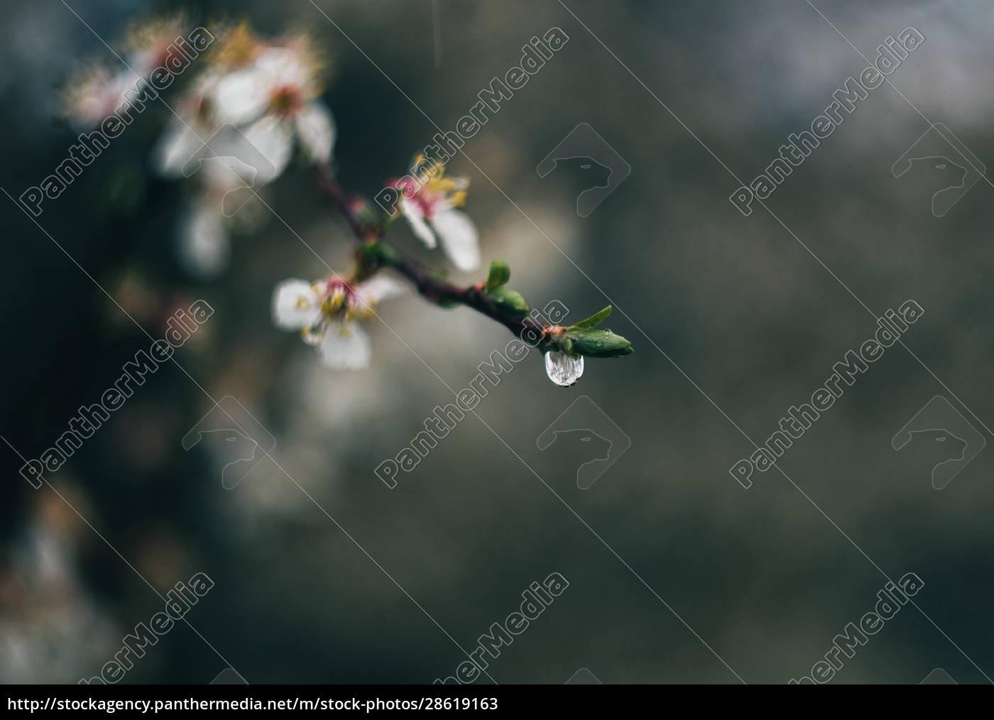 frühling., blütenpflanzen, nah - 28619163