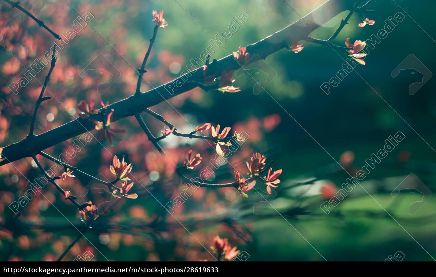 spring, time., blossom, plants, closeup - 28619633