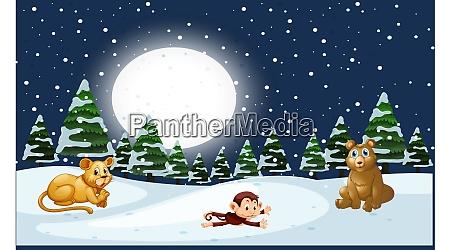 tiere spielen im schnee