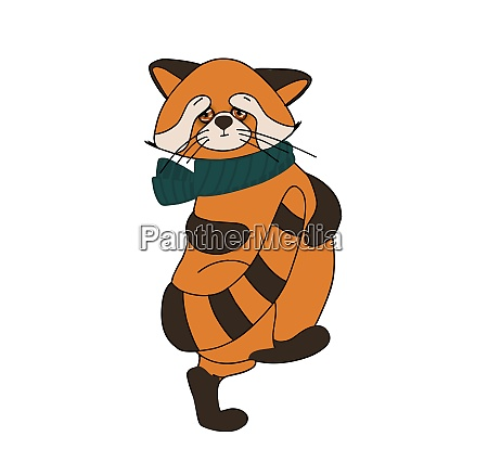 roter panda katzenbaer charakter niedliche tier