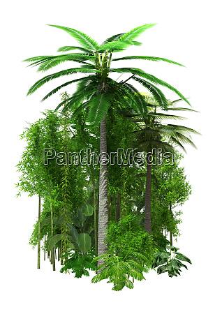 3d rendering dschungelpflanzen auf weiss
