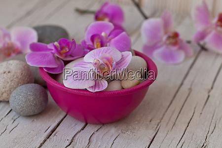rosa orchidee blume stillleben
