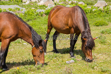 pferde portugal landwirtschaft tiere schoen schoenheit