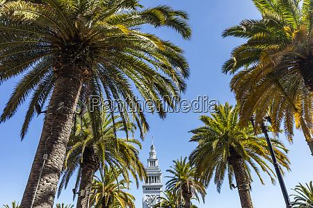 usa, kalifornien, san, francisco, palmen, und, turmspitze, gegen, klaren - 28728722