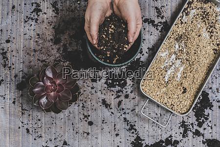 person die kleine saftige pflanzen auftopfen