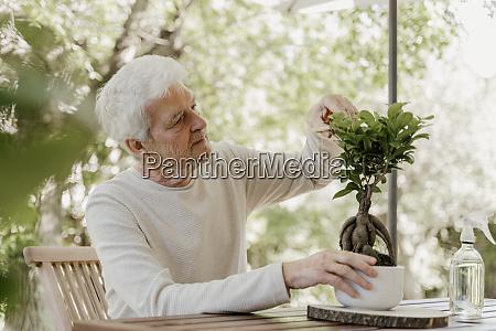 senior mann beschnitt bonsai pflanze