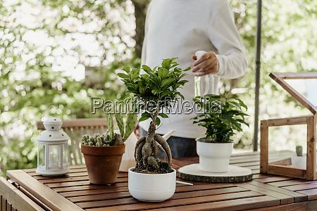 senior mann sprueht hauspflanzen