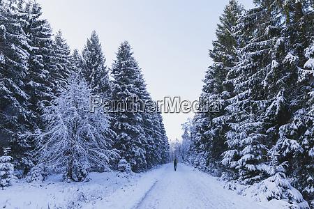 deutschland nordrhein westfalen schneestrasse im nationalpark