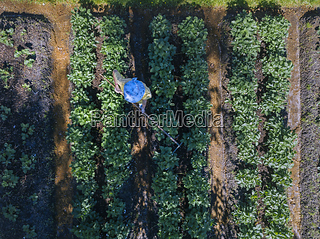 arbeiterin auf erdbeerfeld luftbild
