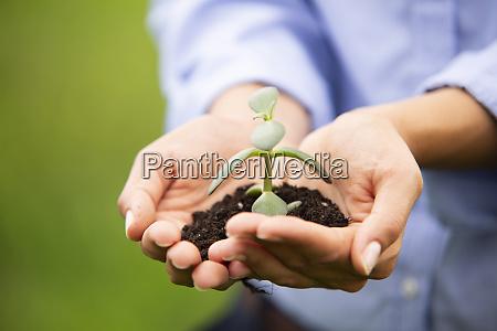 nahaufnahme von weiblichen professionellen holding sapling