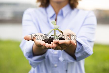 close-up, of, female, entrepreneur, holding, sapling - 28756505