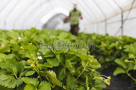 bio erdbeeranbau