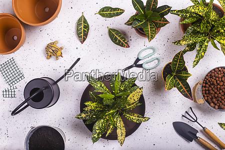 gartenkralle, und, -gabel, schere, plastikfrosch, gießkanne, und, topffeuercrotons, (codiaeum - 28759472