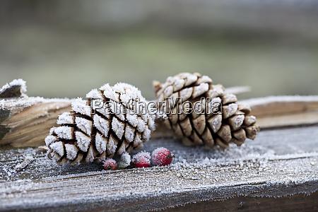 hygge weihnachten winter stillleben