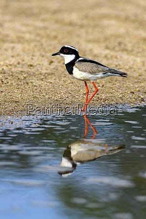 brasilien pantanal 2019 18652