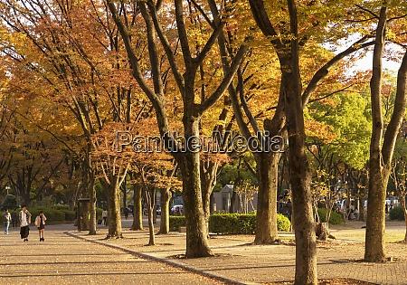 herbstfarben im shirakawa park nagoya honshu