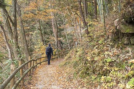 mann wanderwald auf nakasendo way tsumago