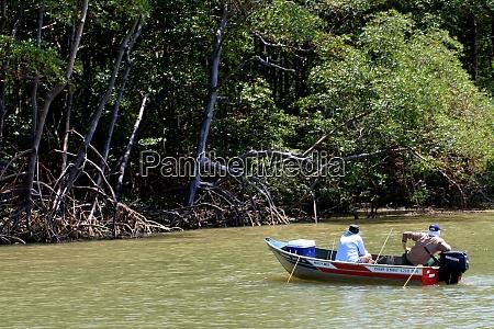 mangrove in suedbahia
