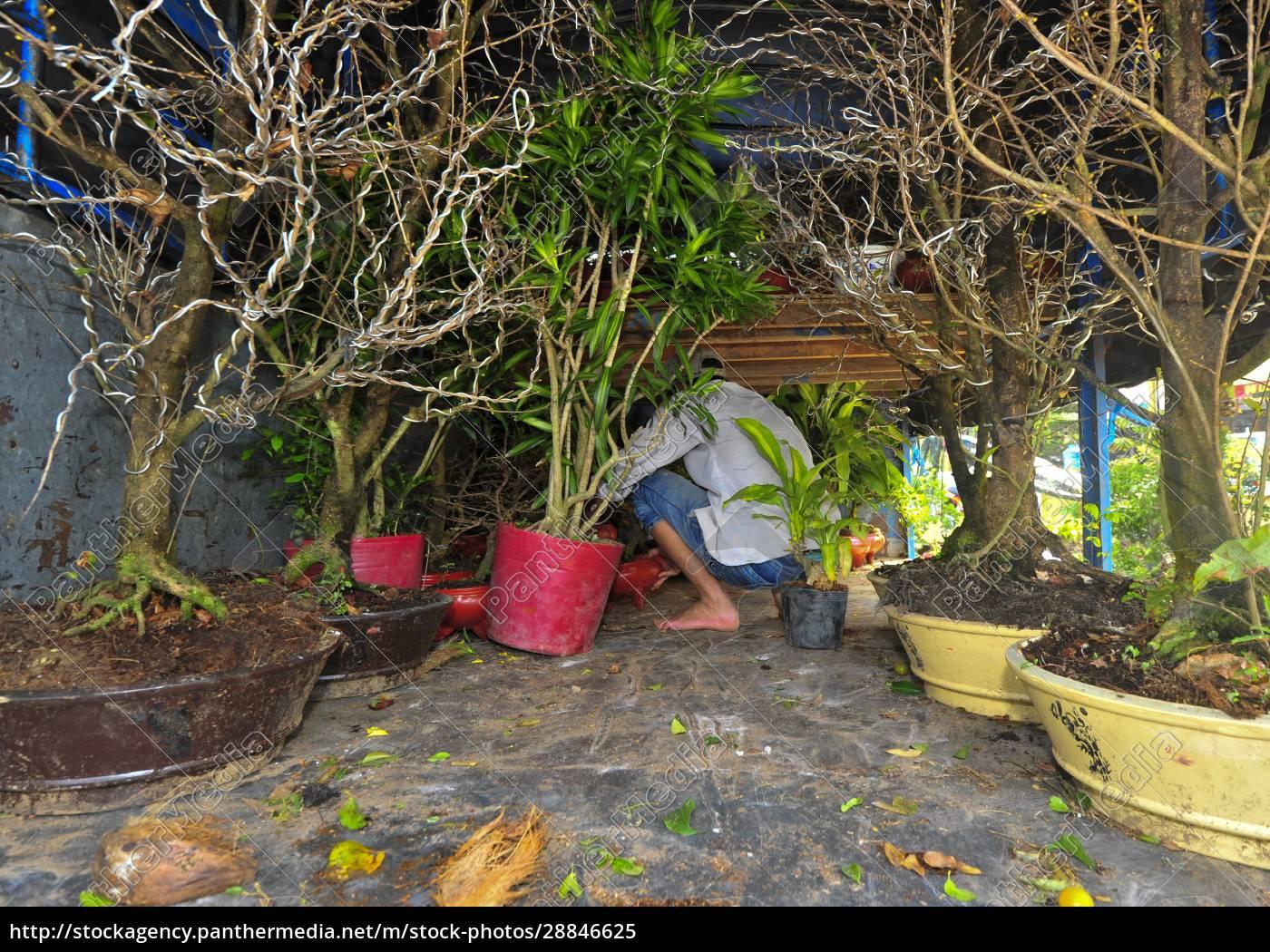 die, bonsai-kultur, in, vietnam - 28846625