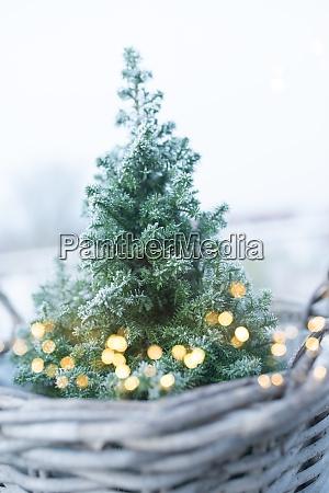 weihnachtsbaum mit goldenem bokeh