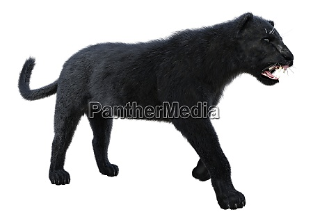 3d rendering black panther auf weiss