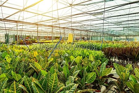 business landwirtschaft botanische gartenbau modernes grosses