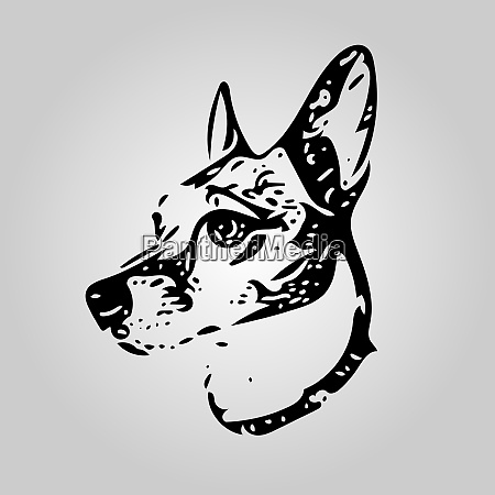 20200923 dogjackrussell1