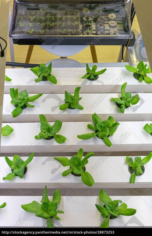 hydroponik, pflanzen, bauernhof - 28873253