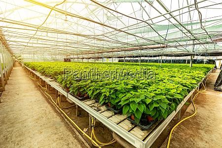gruene pflanze wartet auf bluete