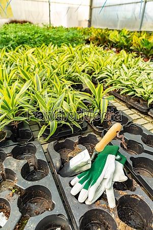 zierpflanzen, und, blumen - 28879099