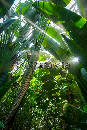 dschungel regenwald hintergrund