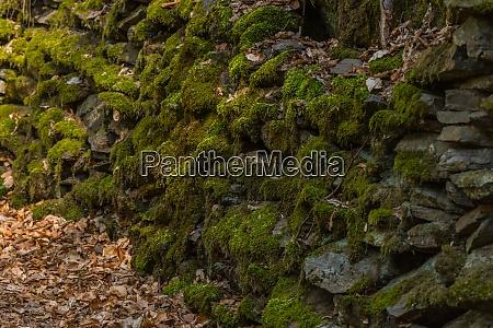 steine mit gruenem moos im wald