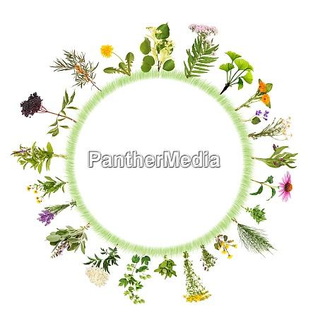 runder rahmen mit vielen verschiedenen heilpflanzen