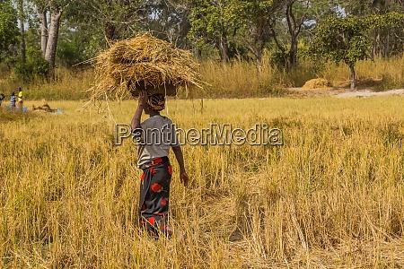 landwirte die auf dem feld arbeiten