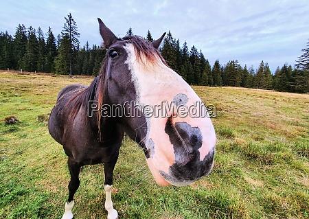 nettes pferd auf der wiese