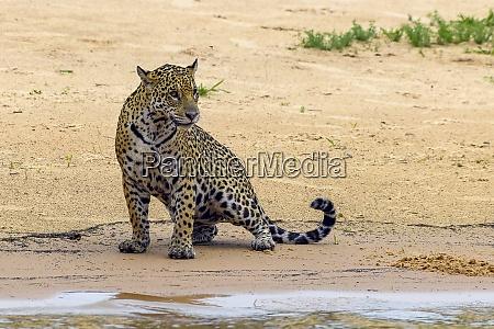 brasilien pantanal 2019 22991