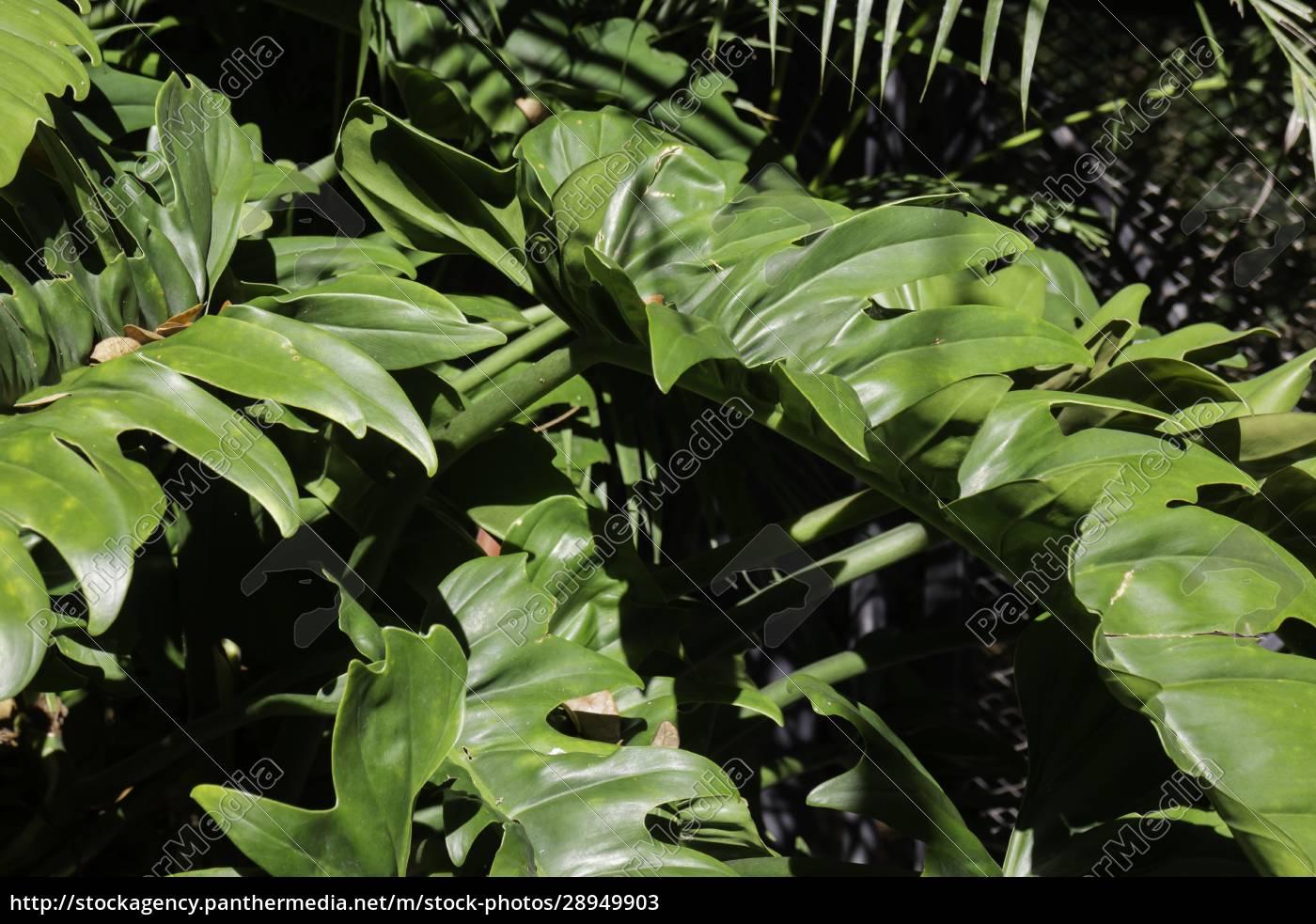 tropical, garden, plants, in, summer - 28949903