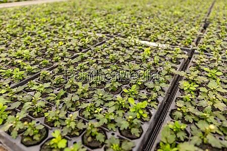 junge pflanzen wachsen in der baumschule