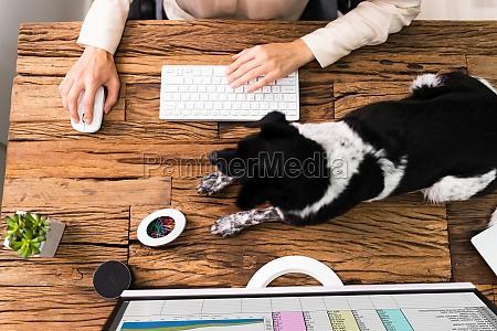 geschaeftsfrauen arbeiten am computer mit hund