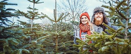 paar, mit, spaß, beim, christbaumverkauf - 28963826