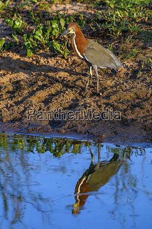 brasilien pantanal 2019 24307