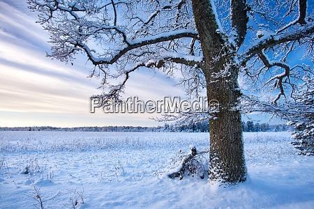 baum in der winterlandschaft