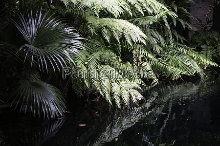 grüne, pflanzen, fühlen, sich, frisch, an - 28982539