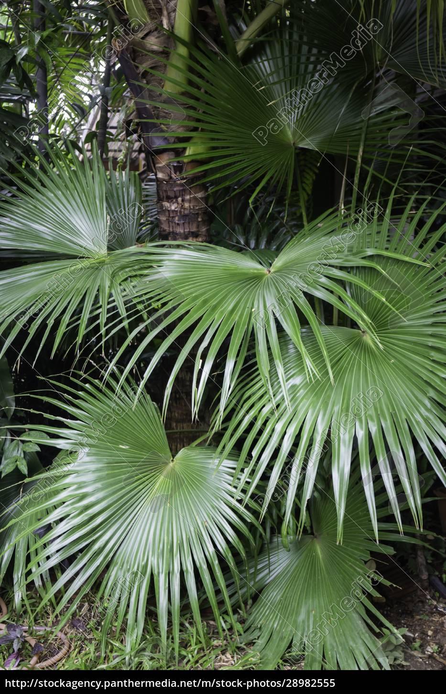 grüne, pflanzen, fühlen, sich, frisch, an - 28982555