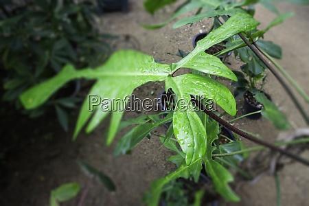 grüne, pflanzen, fühlen, sich, frisch, an - 28982686