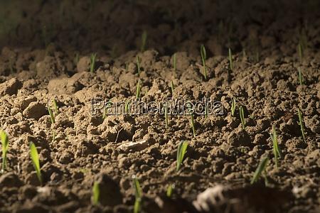 licht als lebenskraft fuer pflanzen